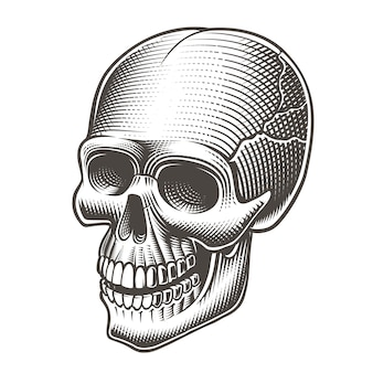 Illustration of a skull in tatto style on a white