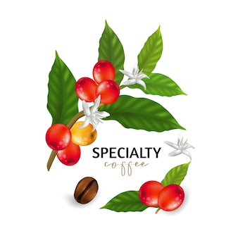Illustration of specialty coffee,  branches of coffee tree with leaves and berry