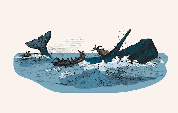 Illustration of the sperm whale while attacking fishing boat