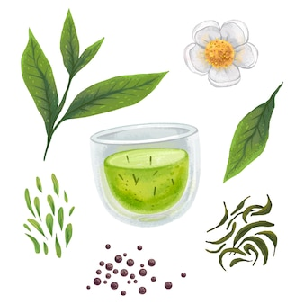 Illustration of tea, mug with tea, dried tea, tea leaves, tea flower, a selection of painted clipart
