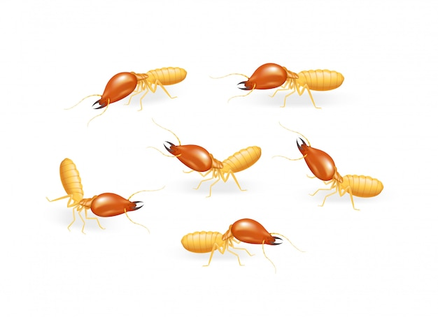Illustration termite isolated on white background, insect species termite ant eaten wood