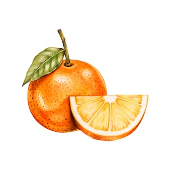 Illustrazione di stile acquerello di frutta tropicale