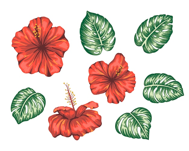 Illustration of tropical hibiscus with monstera leaves isolated. bright realistic flower. floral tropic design elements.