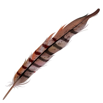 Illustration of turkey feather isolated on white background