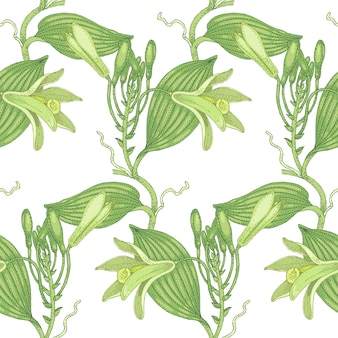 Illustration of vanilla. seamless  pattern. flowers of medicinal plants on a white background.