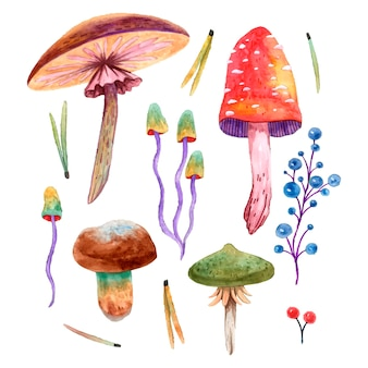 Illustration vector watercolor set of different poisonous mushrooms and berries. fly agaric, toadstools, false mushrooms, needles