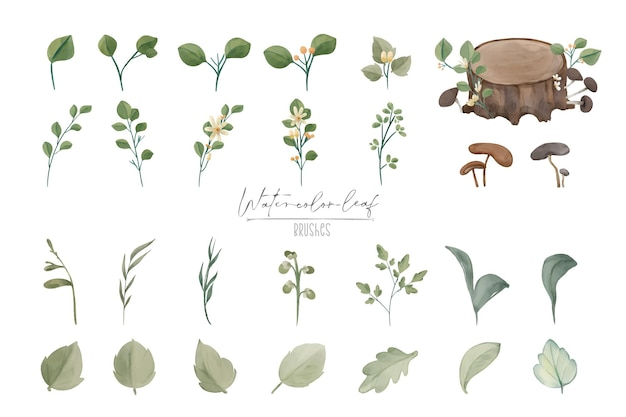 Illustration watercolor leaf and natural wild hand drawn set