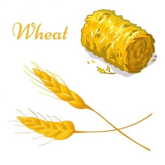 Illustration of wheat illustration on white