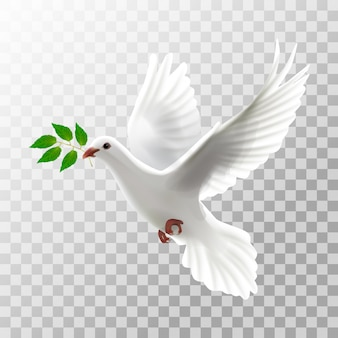 Illustration white pigeon flying with leaf on transparent