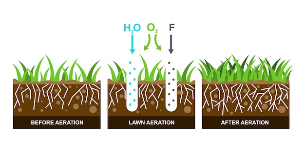 Illustration with lawn aeration.