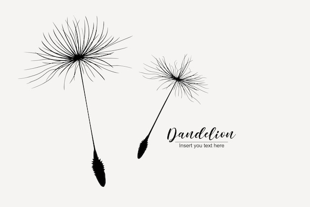 Illustration with two dandelion seed silhouette isolated on white background