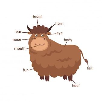 Illustration of yak vocabulary part of body.vector Premium Vector