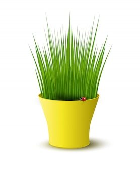 Illustration of yellow pot with green grass