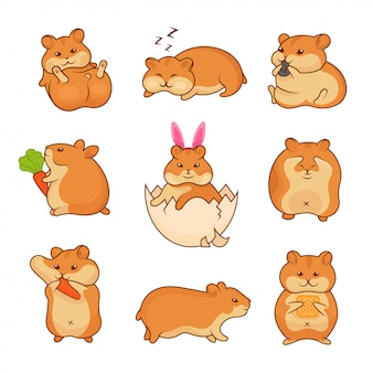 Illustrations of golden hamsters