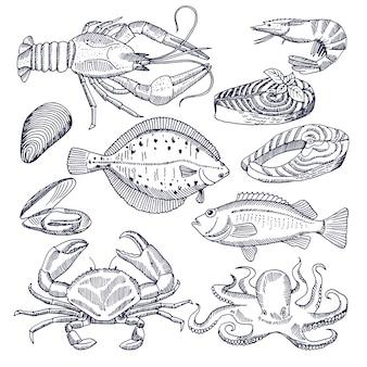 レストランのグルメキッチンのシーフードのイラスト。カキ、ロブスター、魚。メニューのシーフード、サーモンとカニ、ムール貝と魚の写真