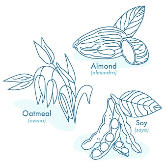 Illustrations of organic almond oat and soybean seeds