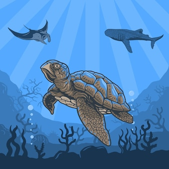 Illustrations underwater of turtles, whales, stingray, coral reefs and water