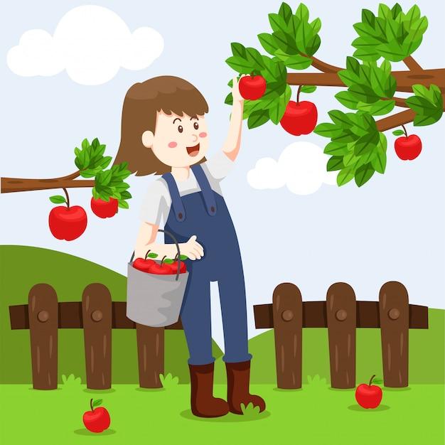 Illustrator of apple farm and girl