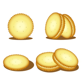 Illustrator of biscuits