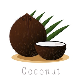 Illustrator of coconut fruit organic
