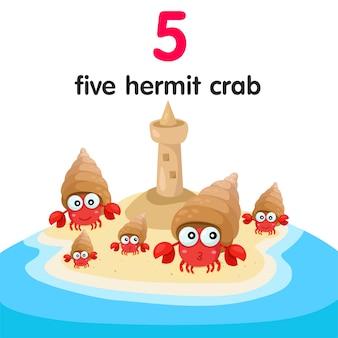 Illustrator of five hermit crab