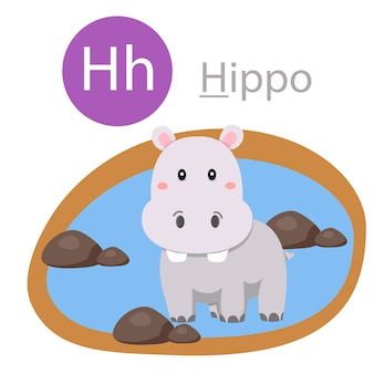Illustrator of h for hippo animal