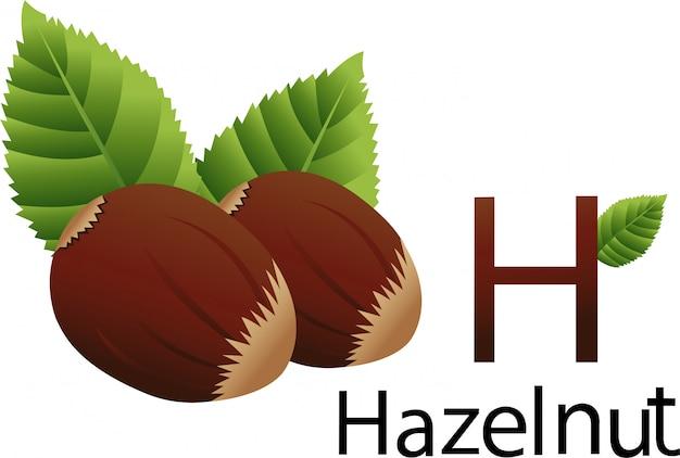 Illustrator hフォント、ヘーゼルナッツ