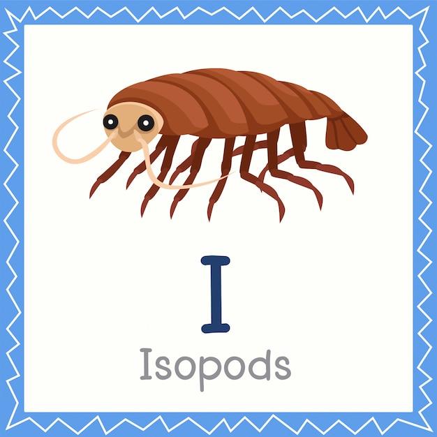 Illustrator of i for isopods animal