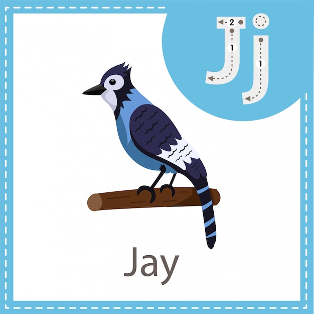 Illustrator of jay bird