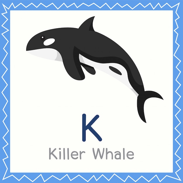 Illustrator of k for killer whale animal