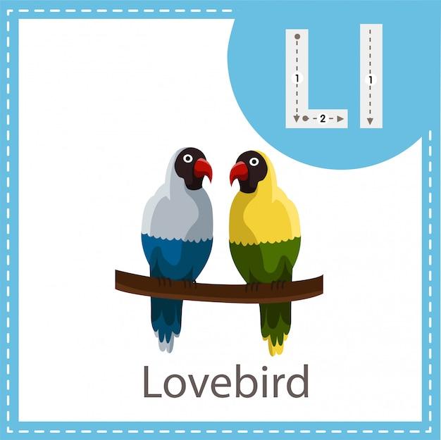 Illustrator of lovebird isloated