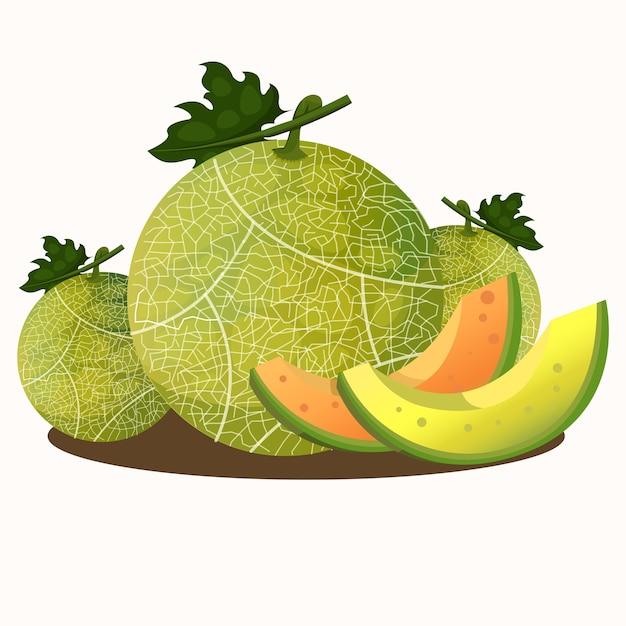 Illustrator of melons fruit