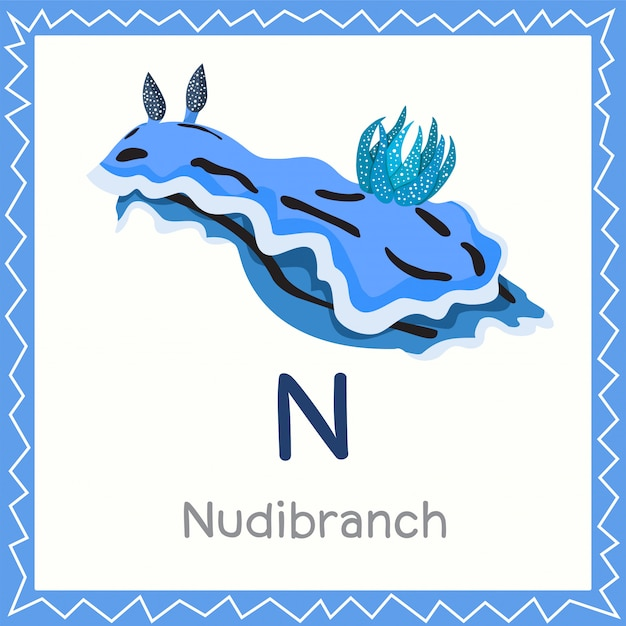 Illustrator of n for nudibranch animal