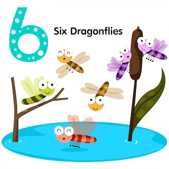 Illustrator of number six dragonfly