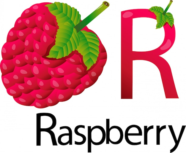 Illustrator r font with raspberry