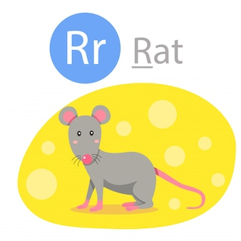 Illustrator of r for rat animal