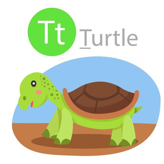 Illustrator of t for turtle animal