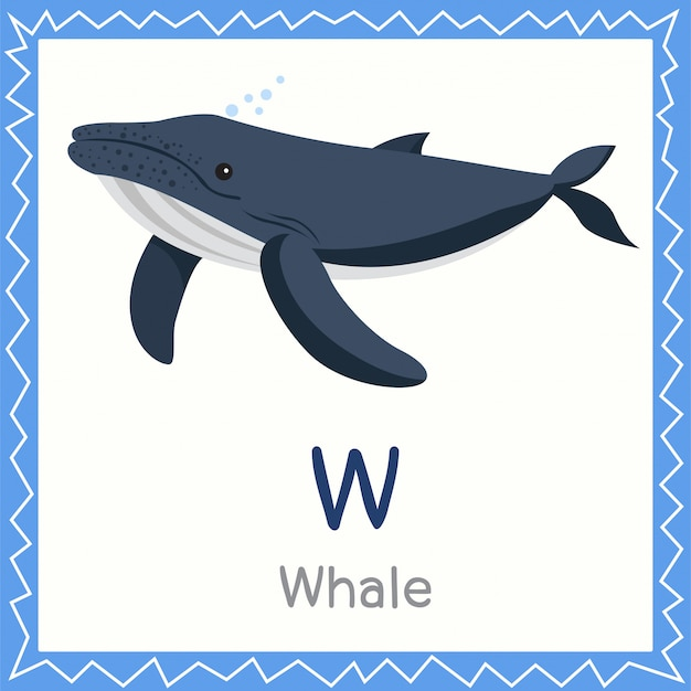 Illustrator of w for whale animal