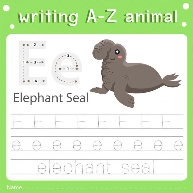 Illustrator of writing a-z animal e elephant seal