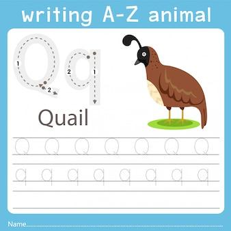 Illustrator writing a-z animal of quail