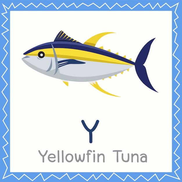 Illustrator of y for yellowfin tuna animal