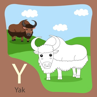 Illustrator of yak isolated and coloring