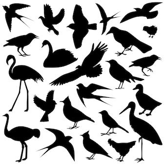 The image of birds
