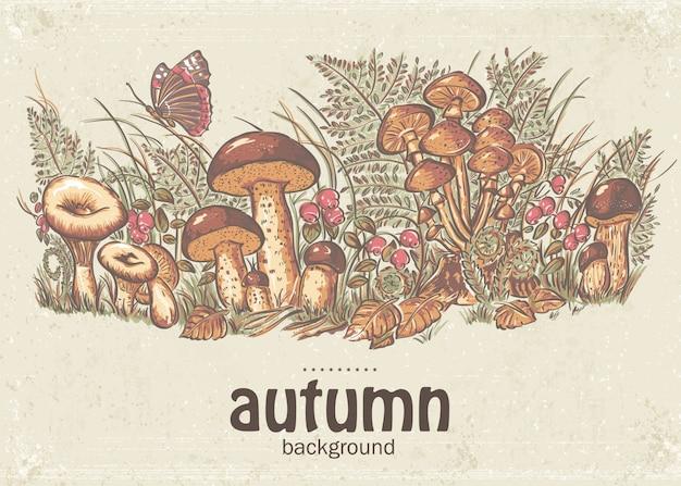 白いキノコ、アンズタケ、カキのキノコと秋の背景のイメージ