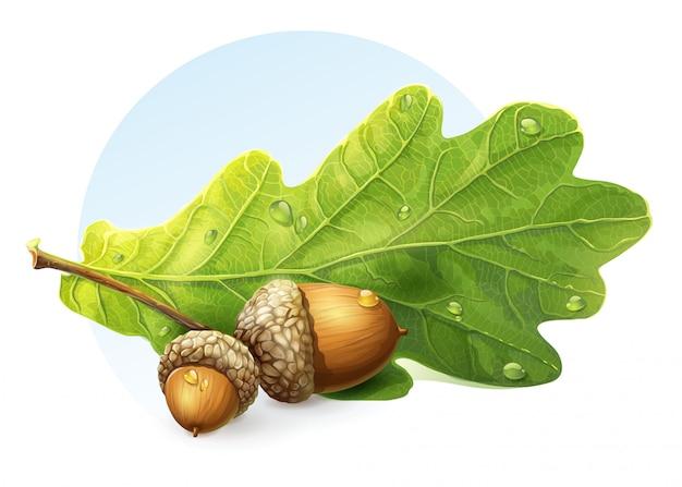 Изображение на белом фоне осенние желуди с зеленым листом