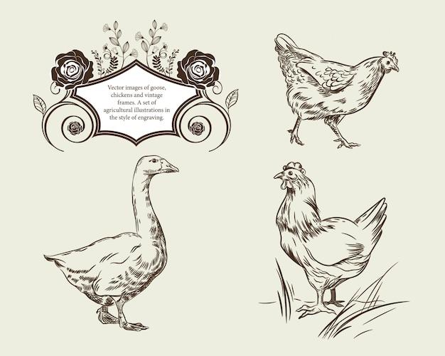 거위 닭과 빈티지 프레임의 이미지.