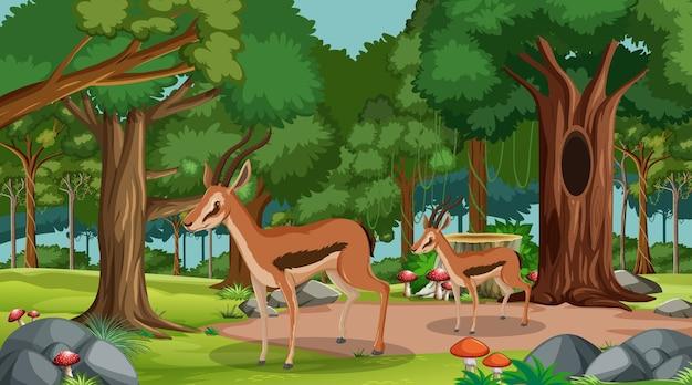 많은 나무와 낮 장면에서 숲에서 임팔라 그룹