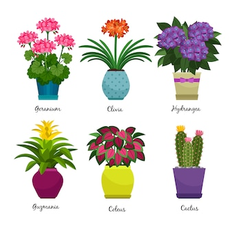 Indoor garden plants and fresh flowers isolated on white