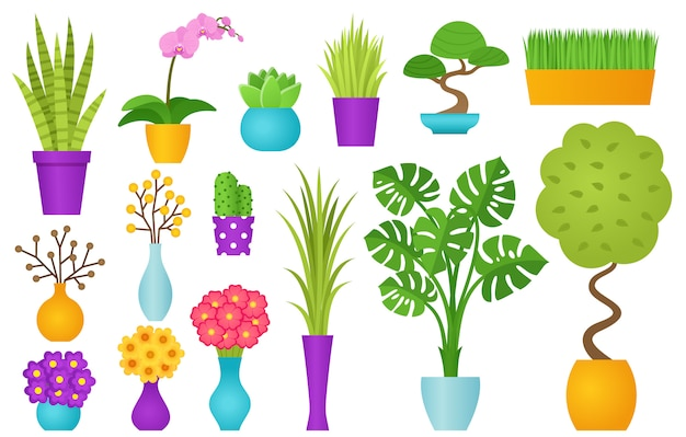 Indoor plant in pot.  illustration.