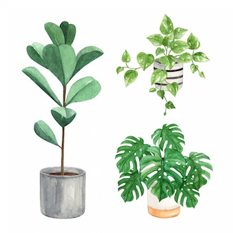 鍋に屋内植物の水彩イラスト